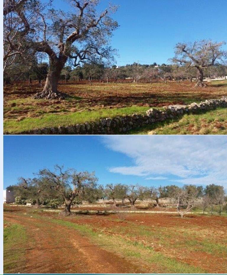 La siccità e le potature: un rapporto spesso conflittuale