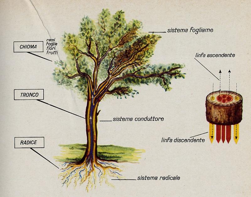 schema di come è strutturato l'albero