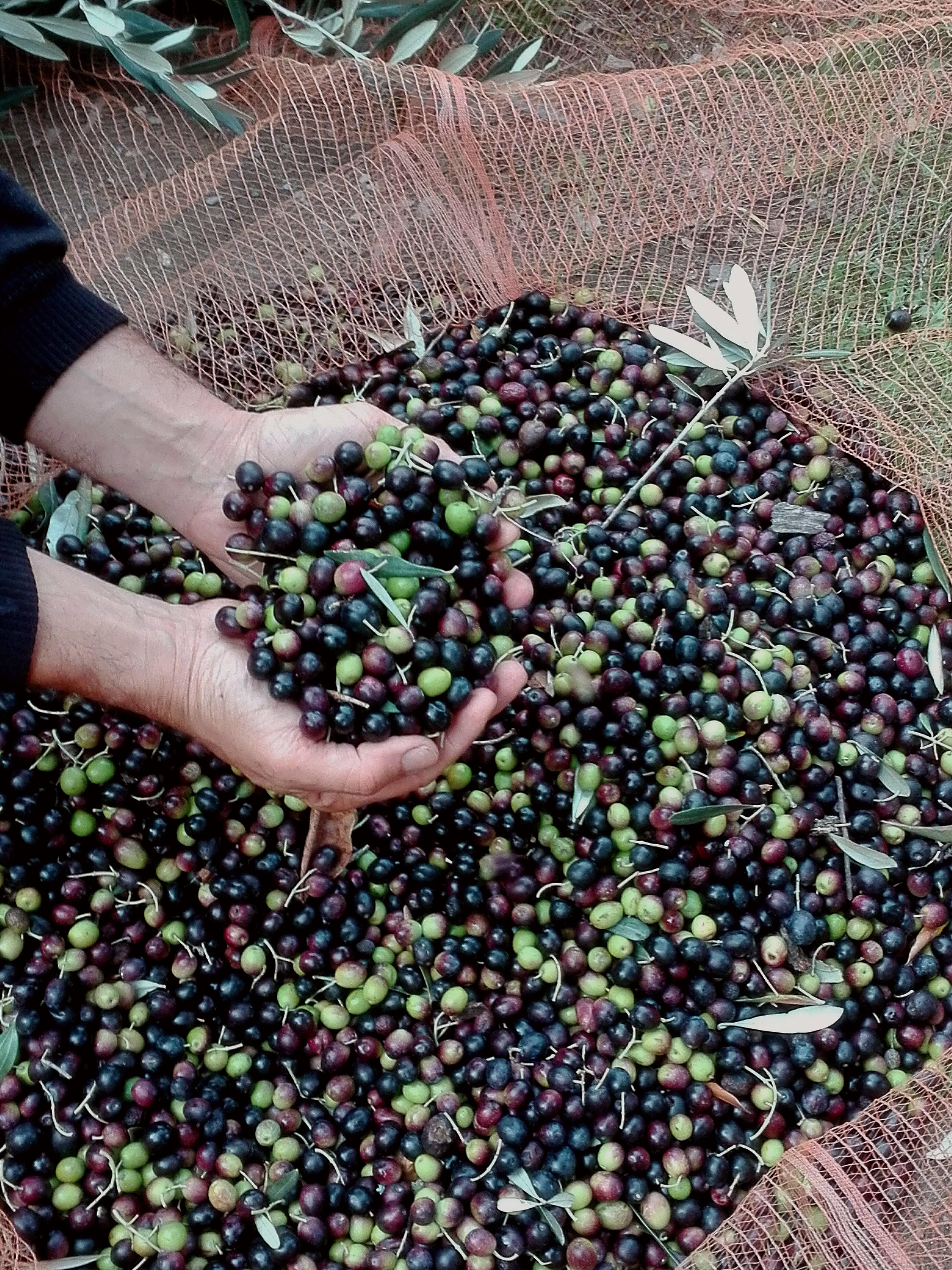 Libri e olivicoltura: aumentiamo le nostre competenze