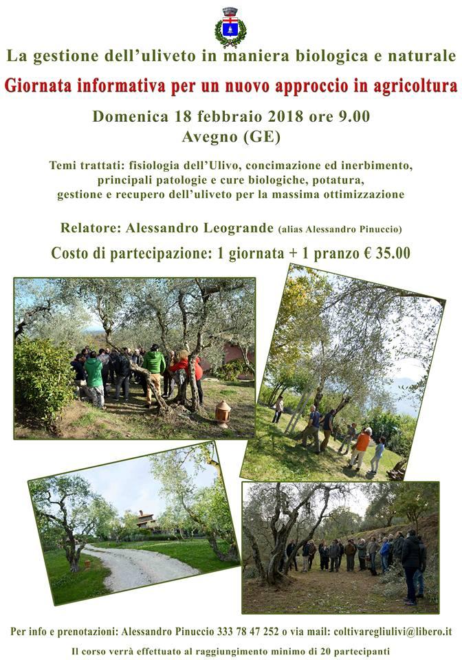 Liguria: la gestione dell'uliveto in  maniera biologica e naturale