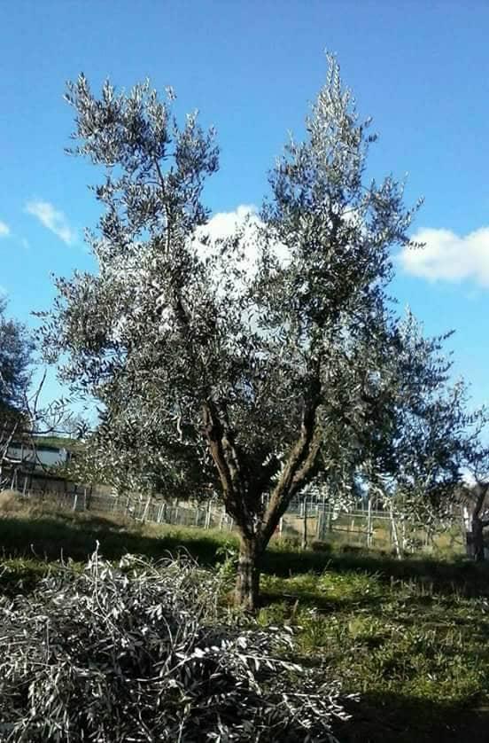 Libri ed olivicoltura: altri testi per aumentare le competenze