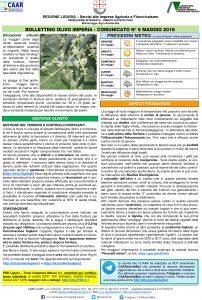 esempio di un bollettino sull'ulivo della regione Liguria