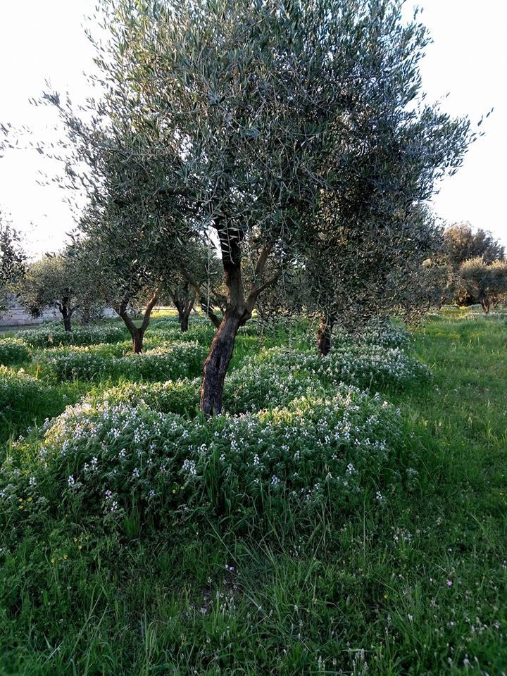 Promozione su semi di favino e veccia biologici : sconto del 15 e 20%