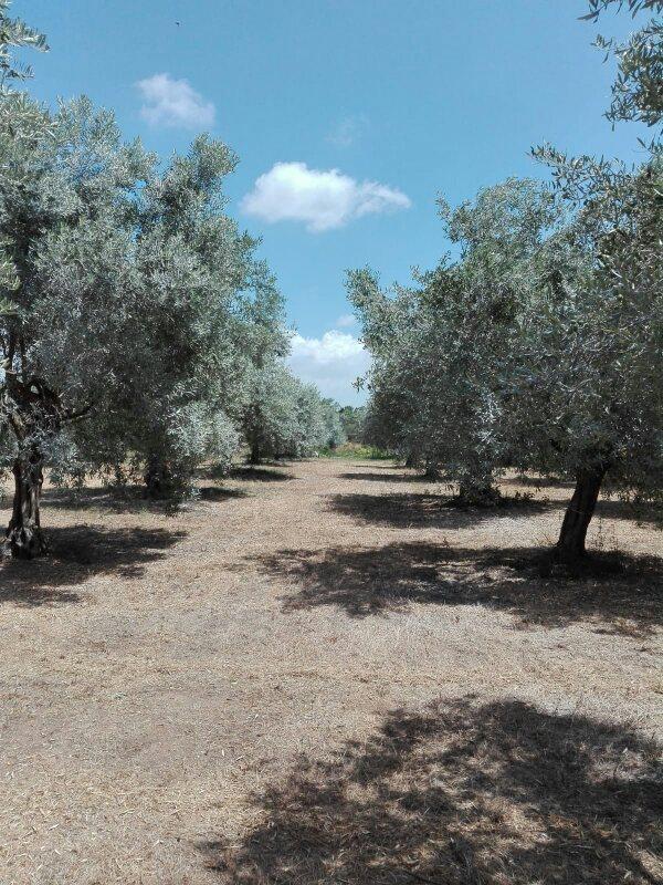Una bella testimonianza dalla Sardegna
