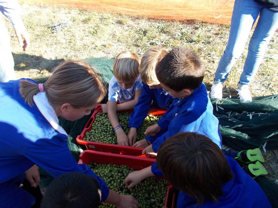 i bambini e gli ulivi