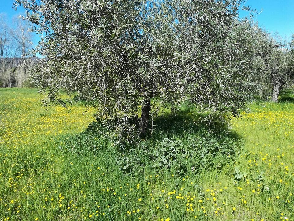 Cover crops: nuovo accordo per altri semi biologici