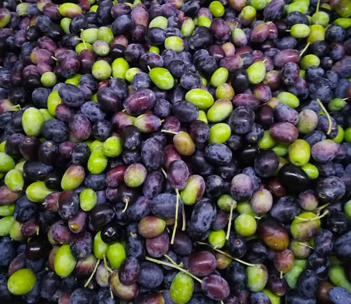 Caolino Agribioclay:rinnovo promozione per il 2019