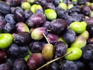 olive trattate con fertenat