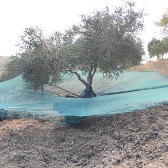 Ombrello raccogli olive