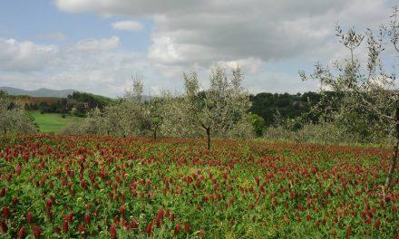 libri ed olivicoltura: terzo appuntamento
