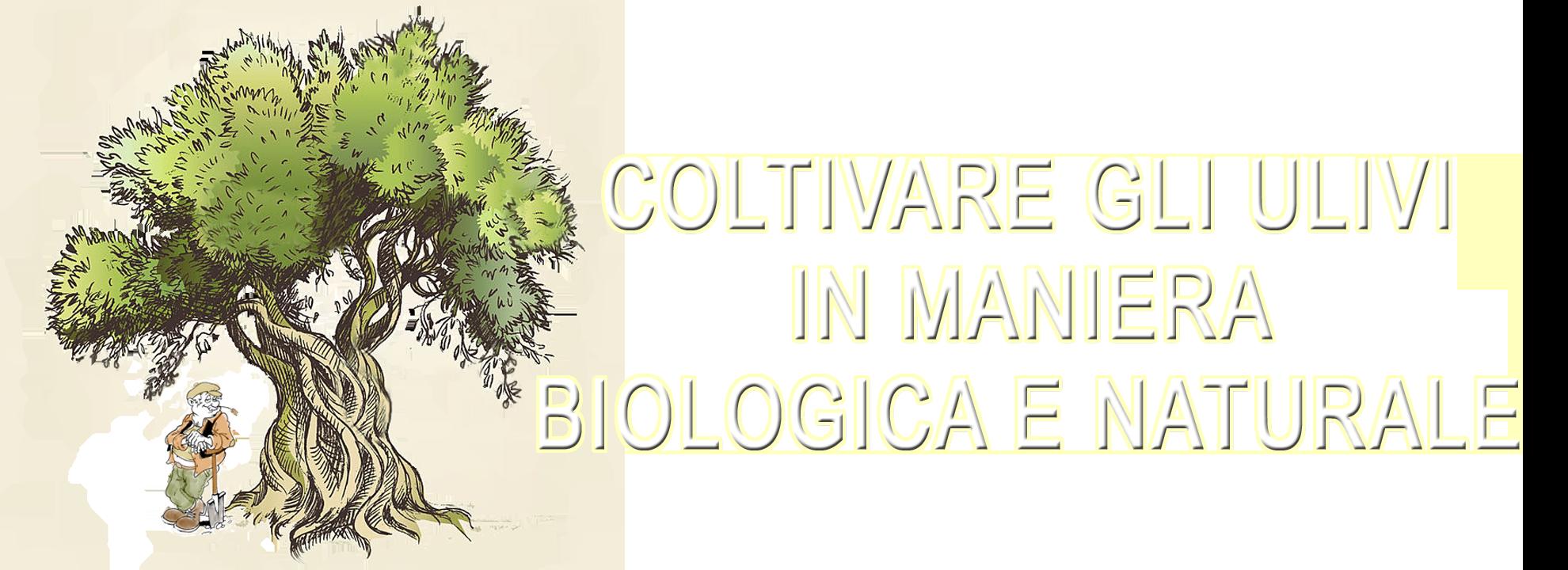 Coltivare gli ulivi in maniera biologica e naturale