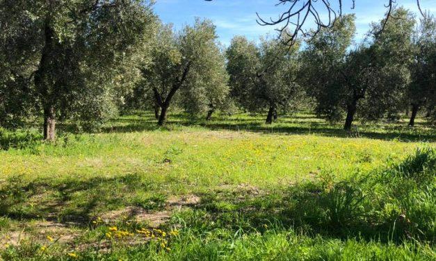 La Zeolite in agricoltura